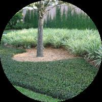 bodembedekkers kopen schaduw groei