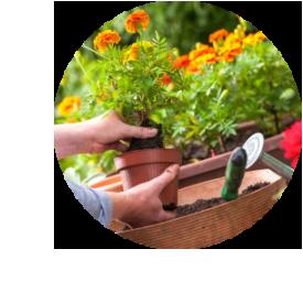 Online planten kopen voordelig