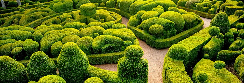 Ook voor al uw Haagplanten kunt u bij ons terecht!